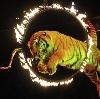 Цирки в Электроуглях