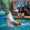 Дельфинарии, океанариумы в Электроуглях